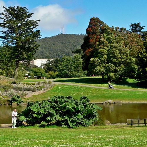 People enjoying San Francisco Botanical Garden