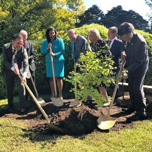 People planting Hiroshima survivor trees in tea garden