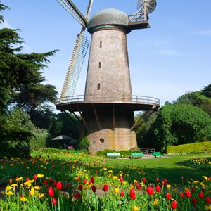 Tulip garden in front of stone windmill