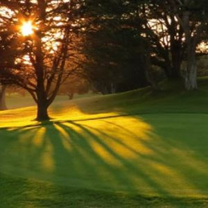 Sunlight shining through the trees on a golf course